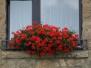 Pflanzen-Blumen