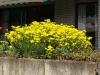 Pflanzen-Blumen-Foto_Textur_B_P4212532