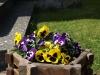 Pflanzen-Blumen-Foto_Textur_B_P4212534