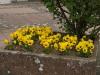Pflanzen-Blumen-Foto_Textur_B_P4222555