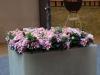 Pflanzen-Blumen-Foto_Textur_B_P4282863