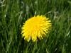 Pflanzen-Blumen-Foto_Textur_B_P5042377