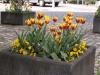 Pflanzen-Blumen-Foto_Textur_B_P5093332