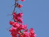 Pflanzen-Blumen-Foto_Textur_B_P5224268