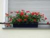 Pflanzen-Blumen-Foto_Textur_B_P6033256