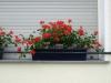 Pflanzen-Blumen-Foto_Textur_B_P6033257