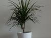 Pflanzen-Blumen-Foto_Textur_B_P6143404