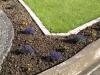 Pflanzen-Blumen-Foto_Textur_B_P6153439