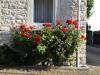 Pflanzen-Blumen-Foto_Textur_B_P6153444