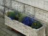 Pflanzen-Blumen-Foto_Textur_B_P6153445