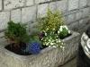 Pflanzen-Blumen-Foto_Textur_B_P6153446