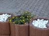 Pflanzen-Blumen-Foto_Textur_B_P6153462