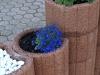 Pflanzen-Blumen-Foto_Textur_B_P6153463