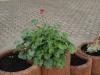 Pflanzen-Blumen-Foto_Textur_B_P6153464