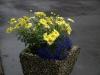 Pflanzen-Blumen-Foto_Textur_B_P6213542