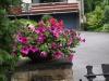Pflanzen-Blumen-Foto_Textur_B_P6213544
