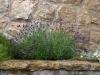 Pflanzen-Blumen-Foto_Textur_B_P6213547