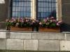 Pflanzen-Blumen-Foto_Textur_B_P6223606