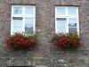 Pflanzen-Blumen-Foto_Textur_B_P6223619