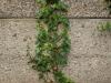 Pflanzen-Blumen-Foto_Textur_B_P6223638