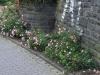 Pflanzen-Blumen-Foto_Textur_B_P6223650