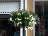 Pflanzen-Blumen-Foto_Textur_B_P6223653