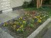 Pflanzen-Blumen-Foto_Textur_B_P6233713