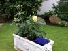 Pflanzen-Blumen-Foto_Textur_B_P6283833
