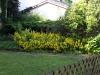 Pflanzen-Blumen-Foto_Textur_B_P6293857