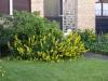 Pflanzen-Blumen-Foto_Textur_B_P6293858