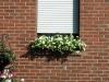 Pflanzen-Blumen-Foto_Textur_B_P6293863