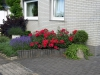 Pflanzen-Blumen-Foto_Textur_B_P6293866