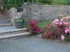 Pflanzen-Blumen-Foto_Textur_B_P7023886