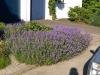 Pflanzen-Blumen-Foto_Textur_B_P7023888