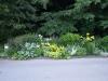 Pflanzen-Blumen-Foto_Textur_B_P7053943