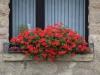 Pflanzen-Blumen-Foto_Textur_B_P8029037