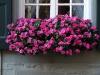 Pflanzen-Blumen-Foto_Textur_B_P8164435