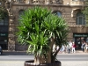 Pflanzen-Blumen-Foto_Textur_B_P8229151