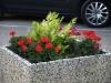 Pflanzen-Blumen-Foto_Textur_B_P8289277