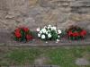 Pflanzen-Blumen-Foto_Textur_B_P9195121