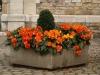 Pflanzen-Blumen-Foto_Textur_B_PA039941