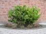 Pflanzen-Buesche