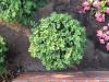 Pflanzen-Buesche-Foto_Textur_B_03060