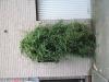 Pflanzen-Buesche-Foto_Textur_B_03870