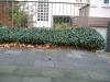 Pflanzen-Buesche-Foto_Textur_B_10550