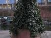 Pflanzen-Buesche-Foto_Textur_B_11640