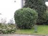 Pflanzen-Buesche-Foto_Textur_B_5610