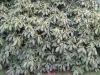 Pflanzen-Buesche-Foto_Textur_B_5611