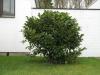 Pflanzen-Buesche-Foto_Textur_B_5612