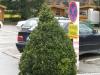 Pflanzen-Buesche-Foto_Textur_B_5622